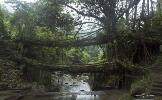 Double-Decker-Living-Bridge-Meghalaya-Traveloncemore