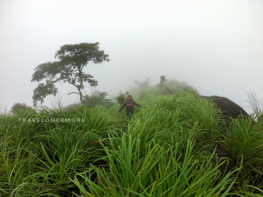 the forest area stretches more than three kilometres and is covered by 'Kotha' grass.