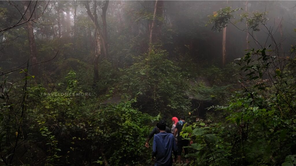 Thick rainforest -Trekking route to the Rainbow Falls.